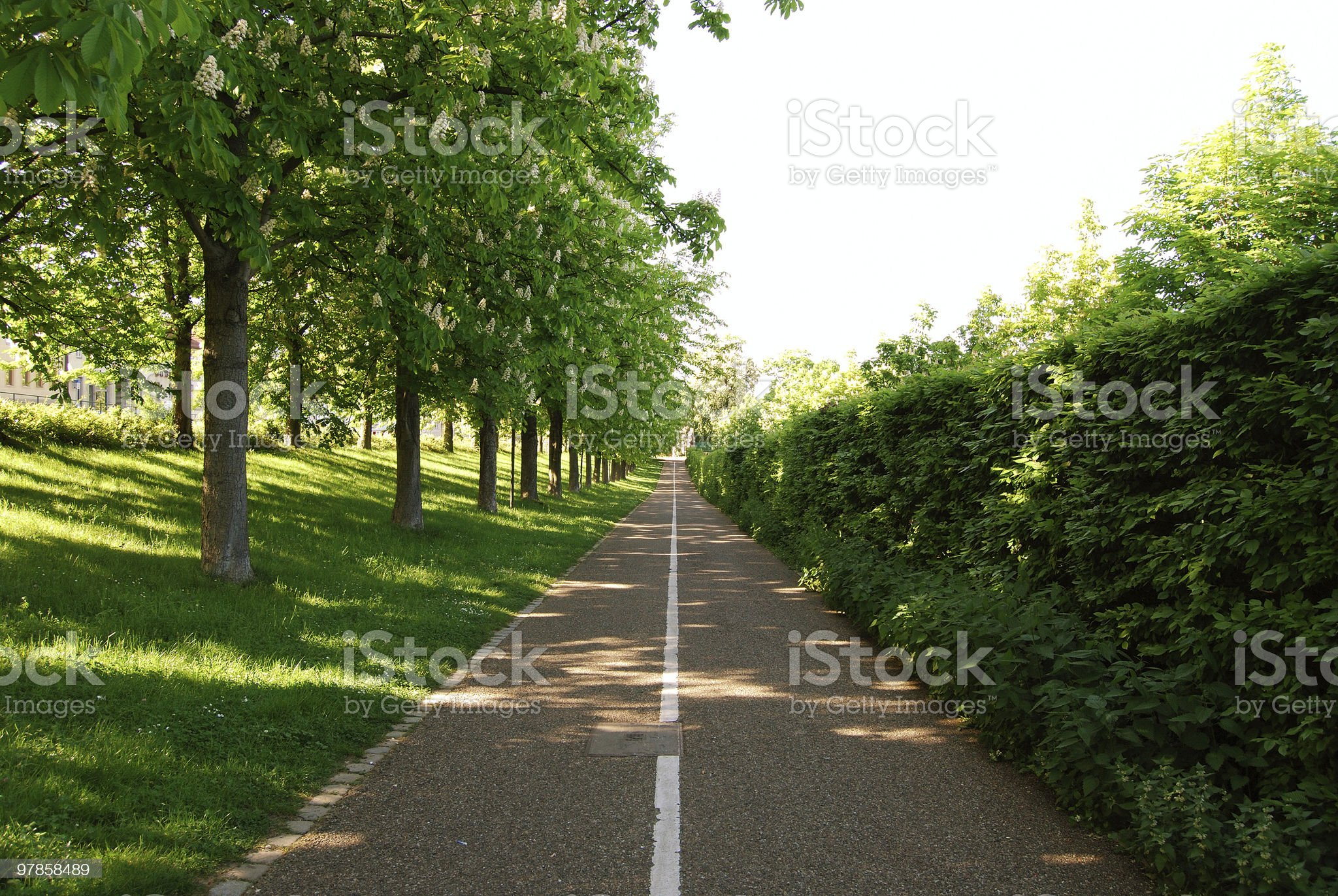 Green alley royalty-free stock photo