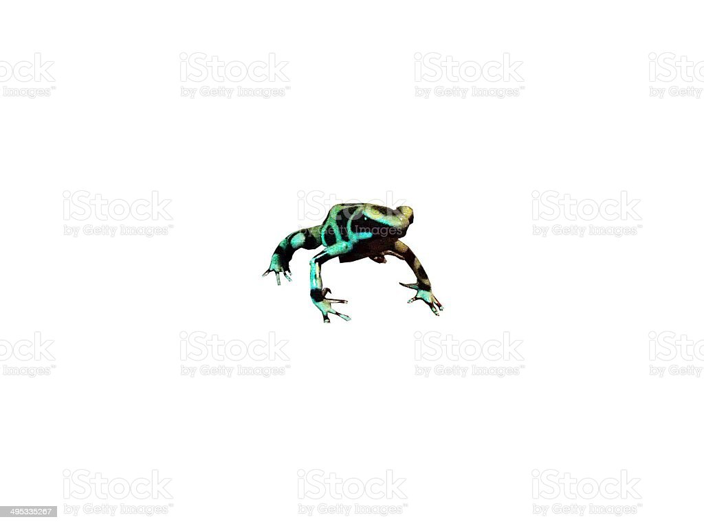 green and black aurtaus dart frog transparent. stock photo