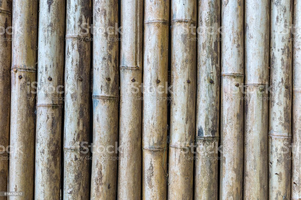 Green and brown Bamboo fence background stock photo