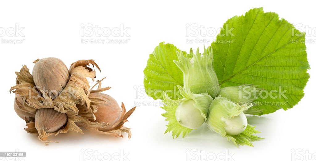 green and brown hazelnuts isolated on white background stock photo