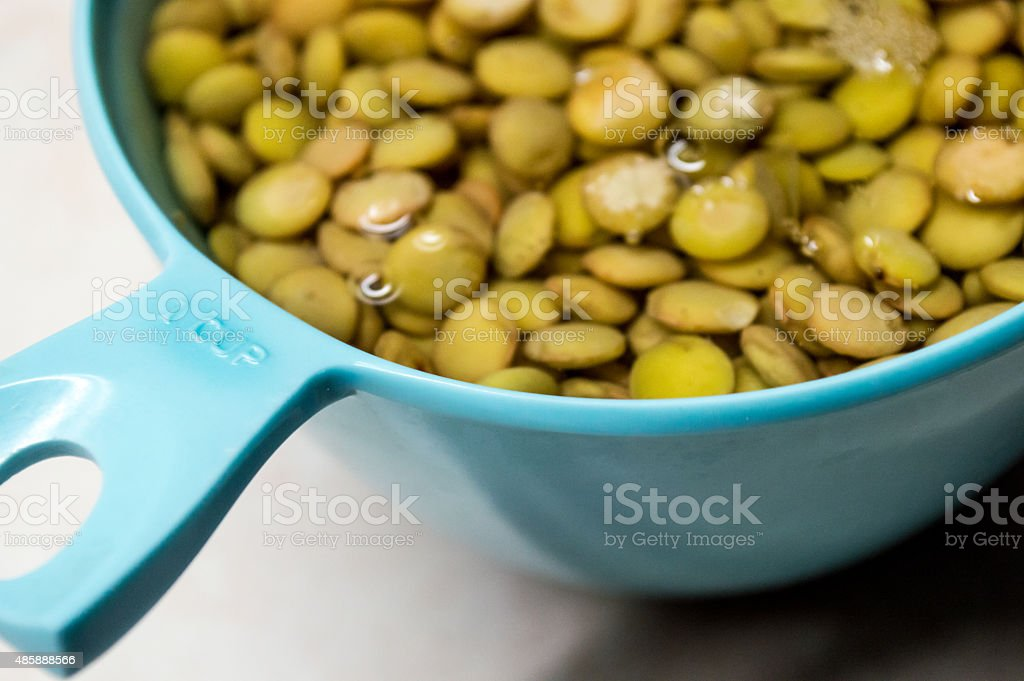 Green and Brown Lentils Soaking in a 'One Cup' Bowl royalty-free stock photo