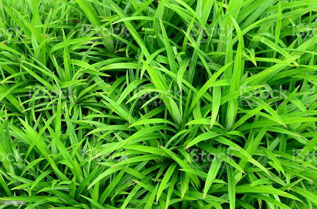green and fresh grass as background vector art illustration