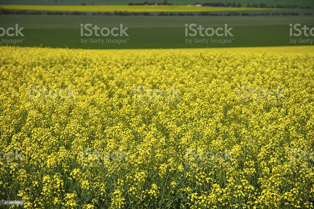 Green and Gold stock photo