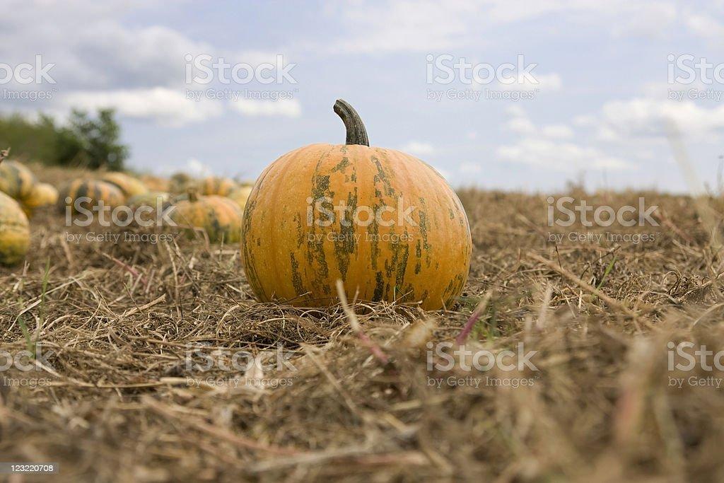 Green and orange pumpkin stock photo