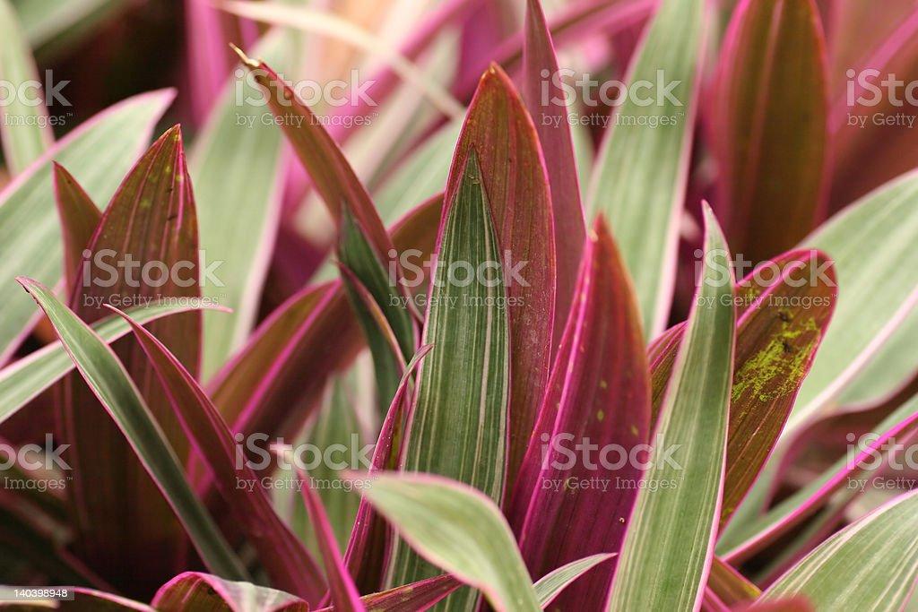 Verde y rosa hojas foto de stock libre de derechos