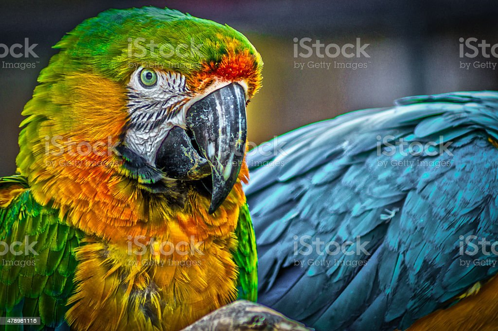 Green and yellow macaw stock photo