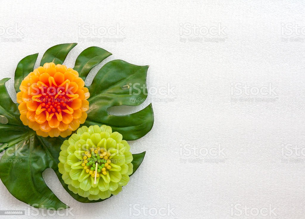 Green and yellow on green leaf royalty-free stock photo