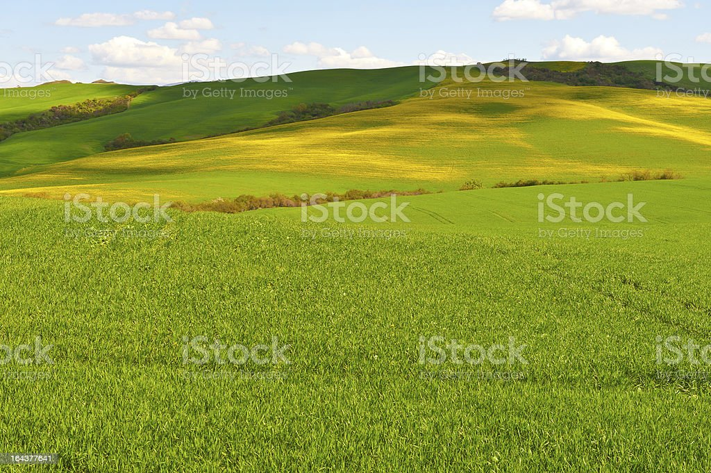 Green and Yellow royalty-free stock photo