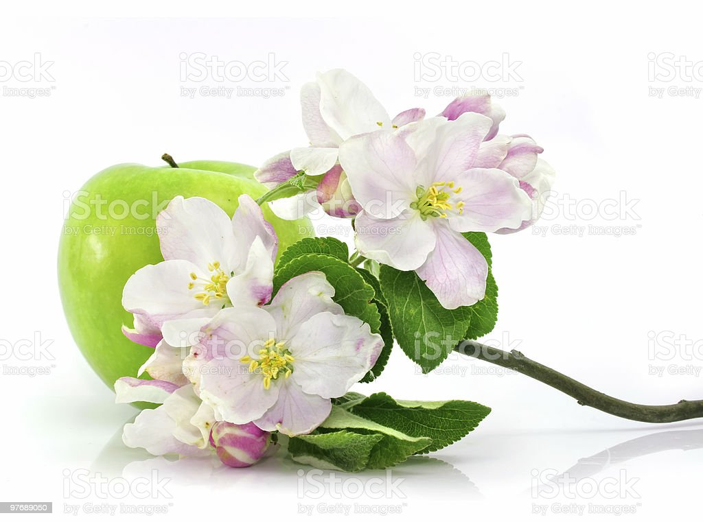 green apple fruit isolated with pink flowers on branch royalty-free stock photo