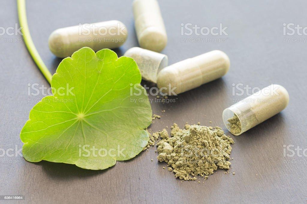 Green Asiatic Pennywort (Centella asiatica , Hydrocotyle umbella stock photo