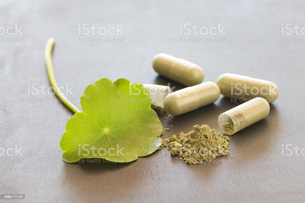 Green Asiatic Pennywort (Centella asiatica , Hydrocotyle umbella stock photo