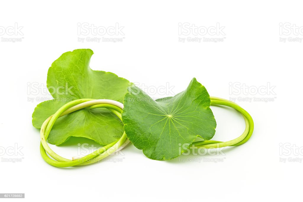 Green Asiatic Pennywort (Centella asiatica ) on white background stock photo