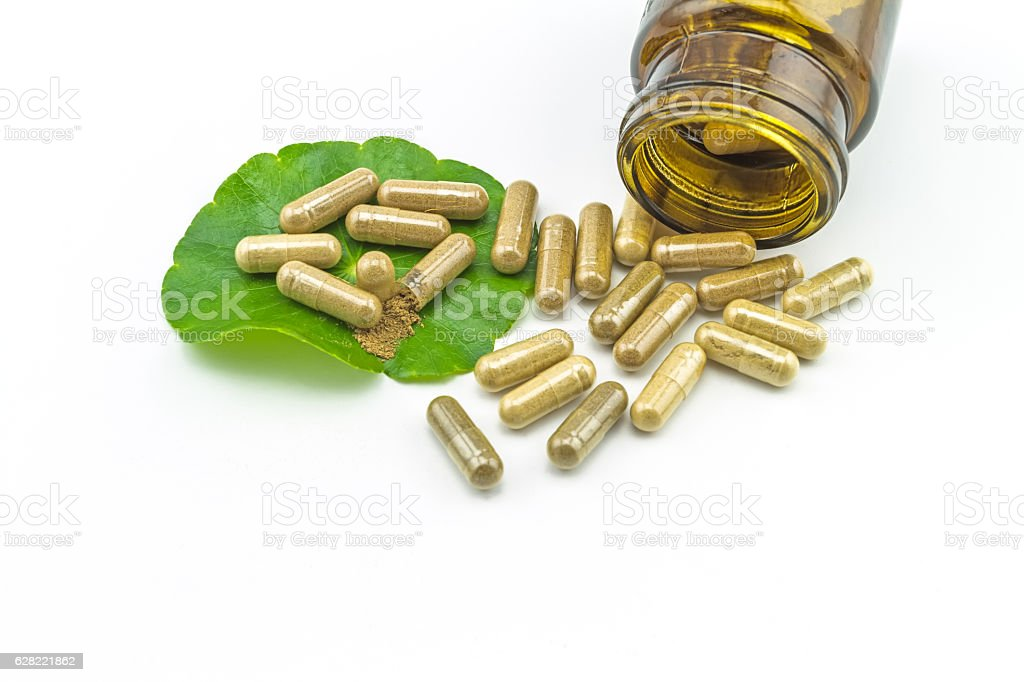 Green Asiatic Pennywort (Centella asiatica ) , yellow capsules  on white stock photo
