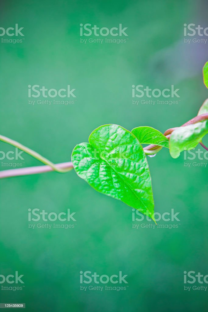 green background with leaf stock photo