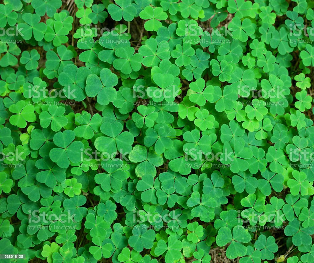 green background with three-leaved shamrocks. stock photo