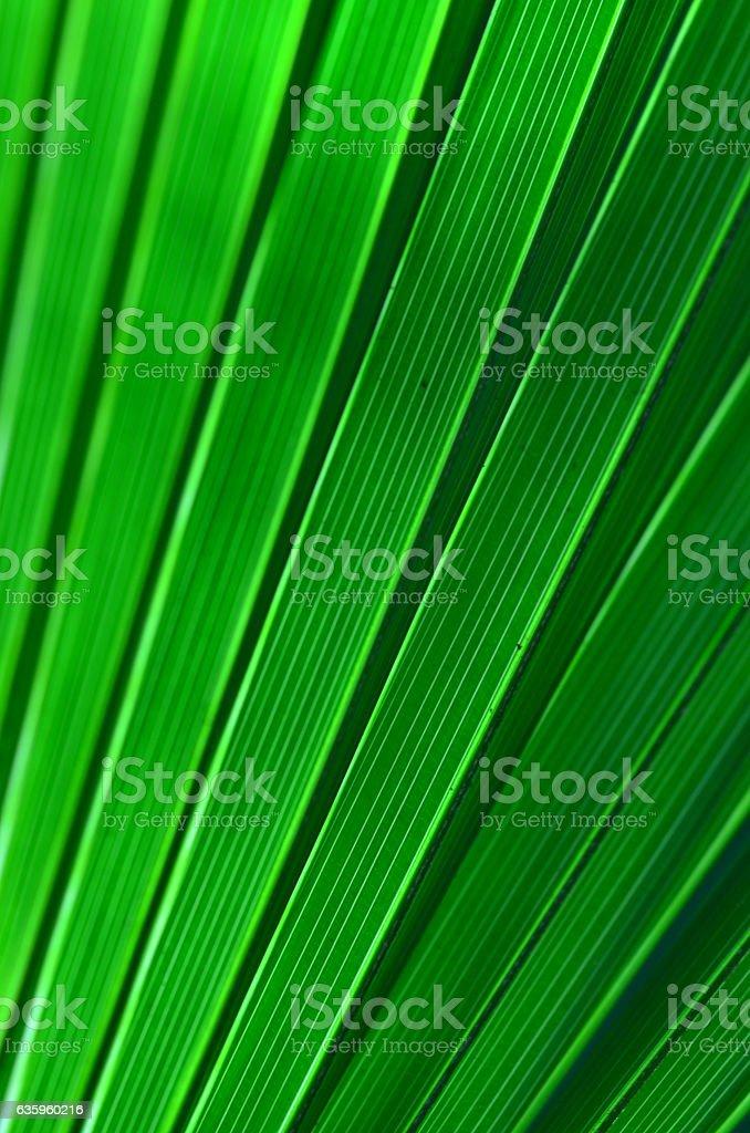 Green backlit palm leaf detail diagonal across frame stock photo