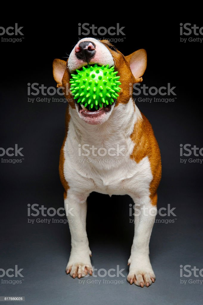 Green ball dog stock photo