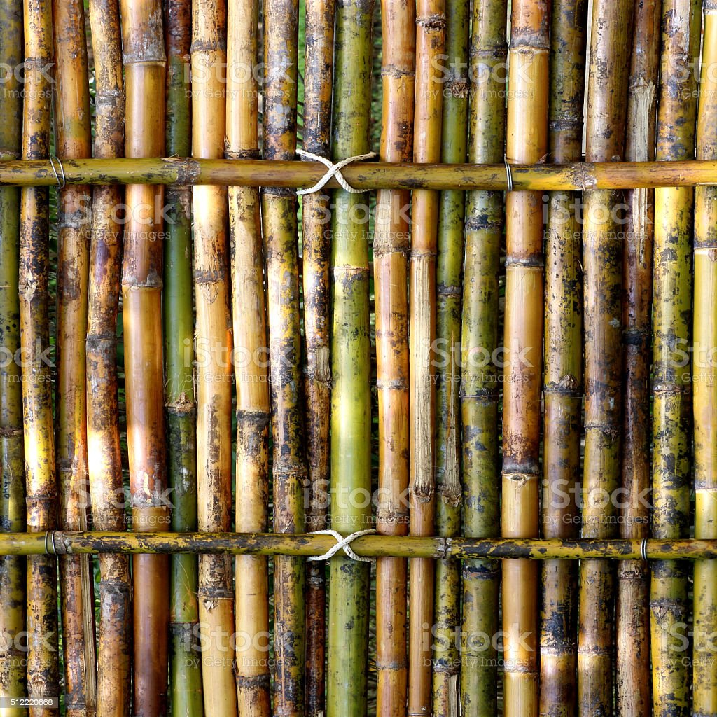 green bamboo fence background stock photo