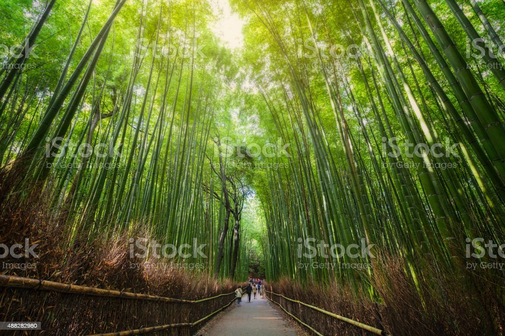Green bamboo forest and walk way. stock photo