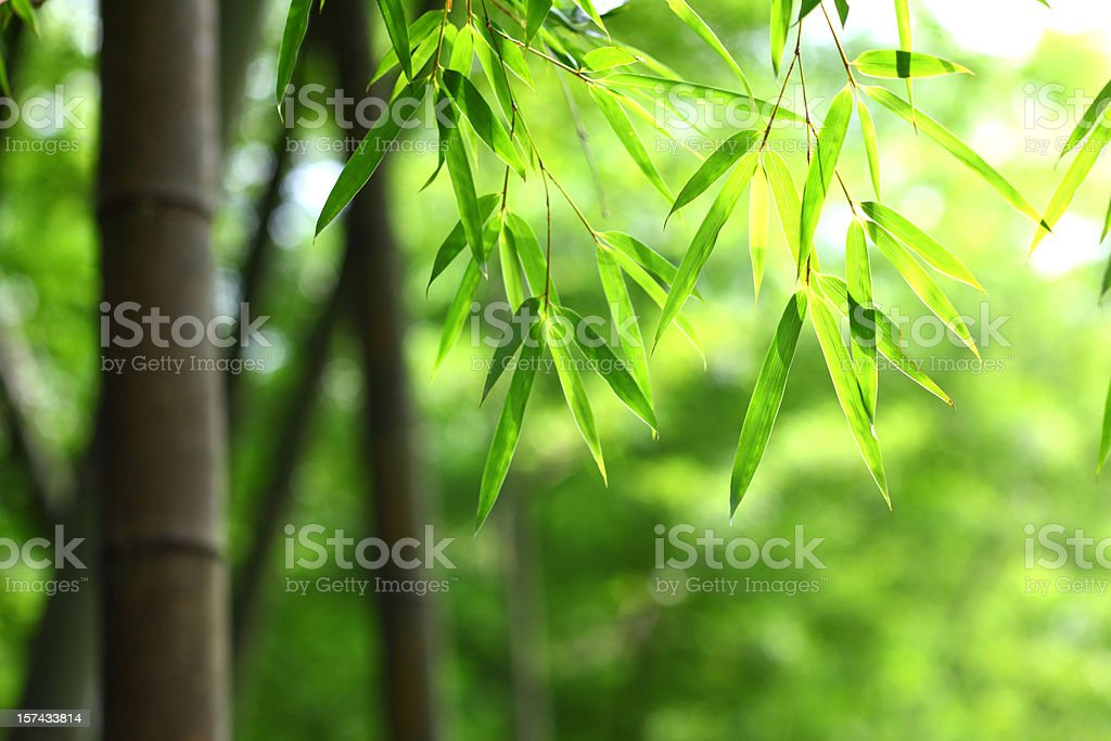 Green bamboo leaves background royalty-free stock photo