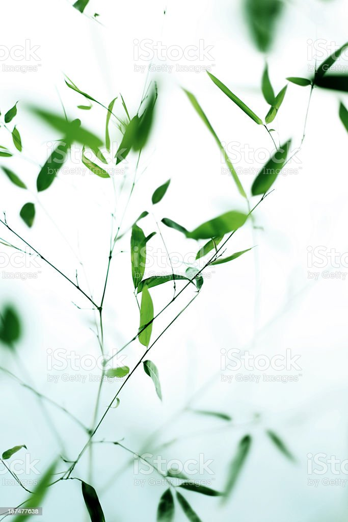 Green Bamboo Leaves royalty-free stock photo