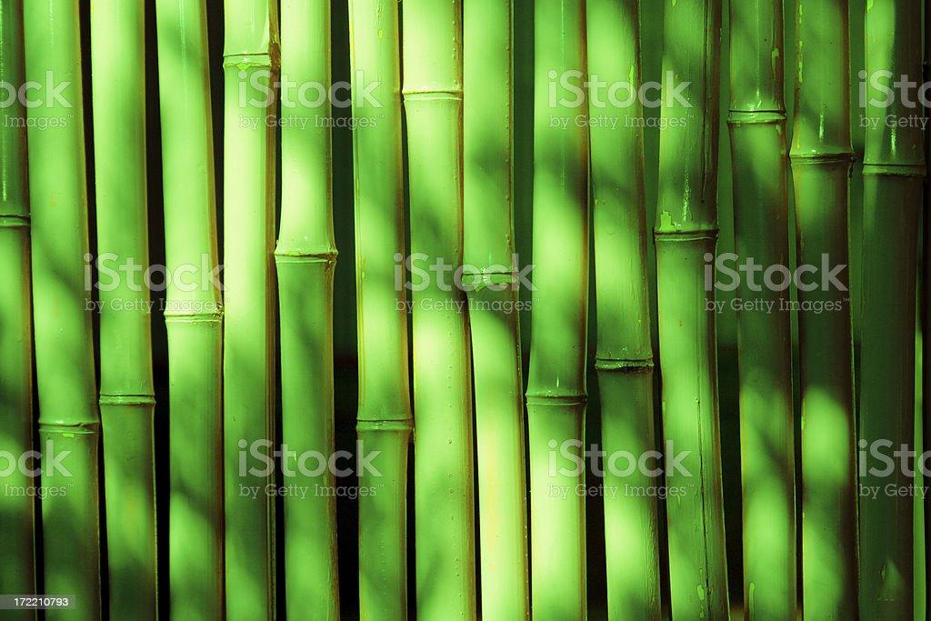 Green bamboo royalty-free stock photo