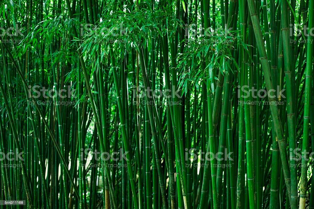 Green bamboo stems. stock photo