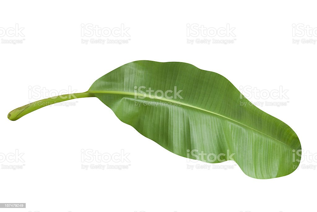 Green banana leaf isolated on white with clipping path royalty-free stock photo