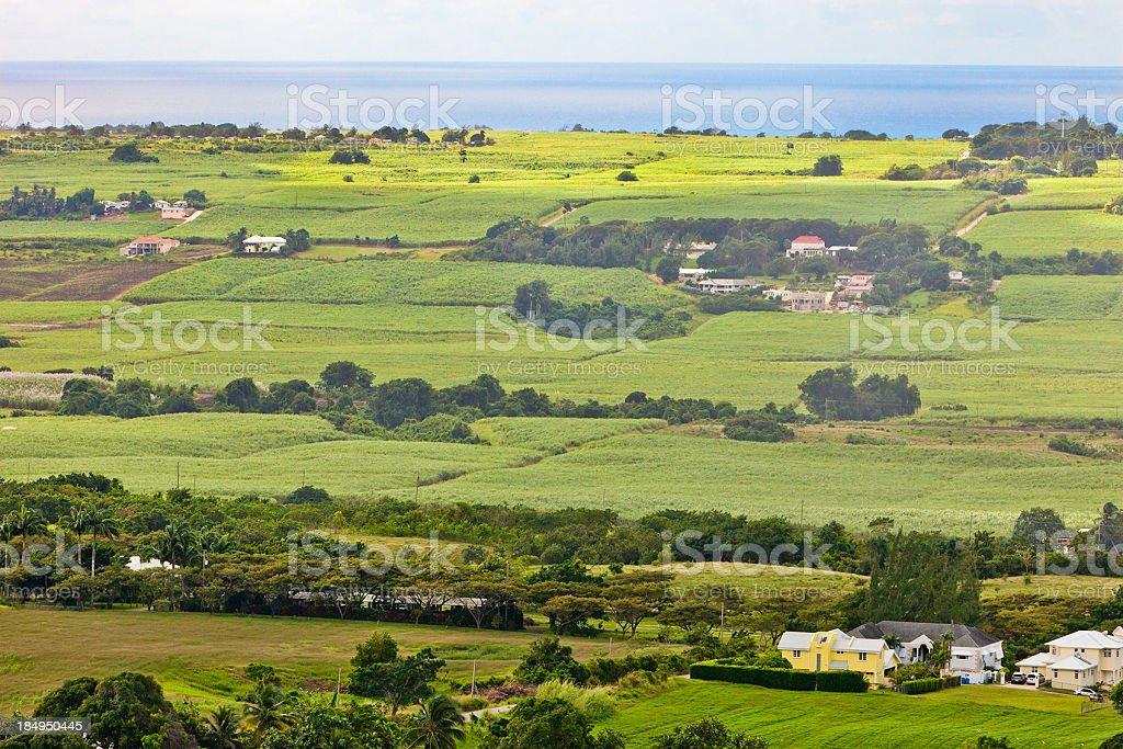 Green Barbados stock photo