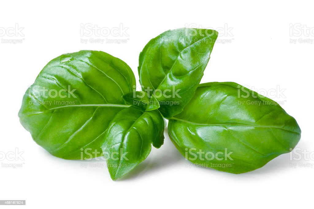 Green basil leaves isolated on a white background stock photo