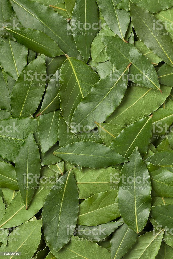 Green bay leaves full frame stock photo