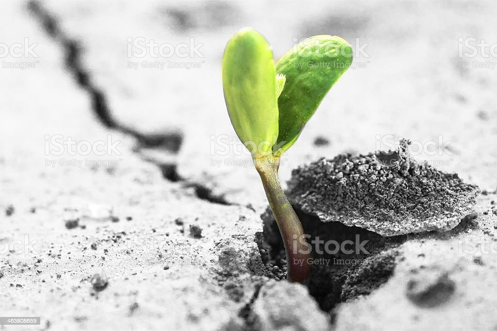 Green bean sprout growing through a crack in grey cement  stock photo