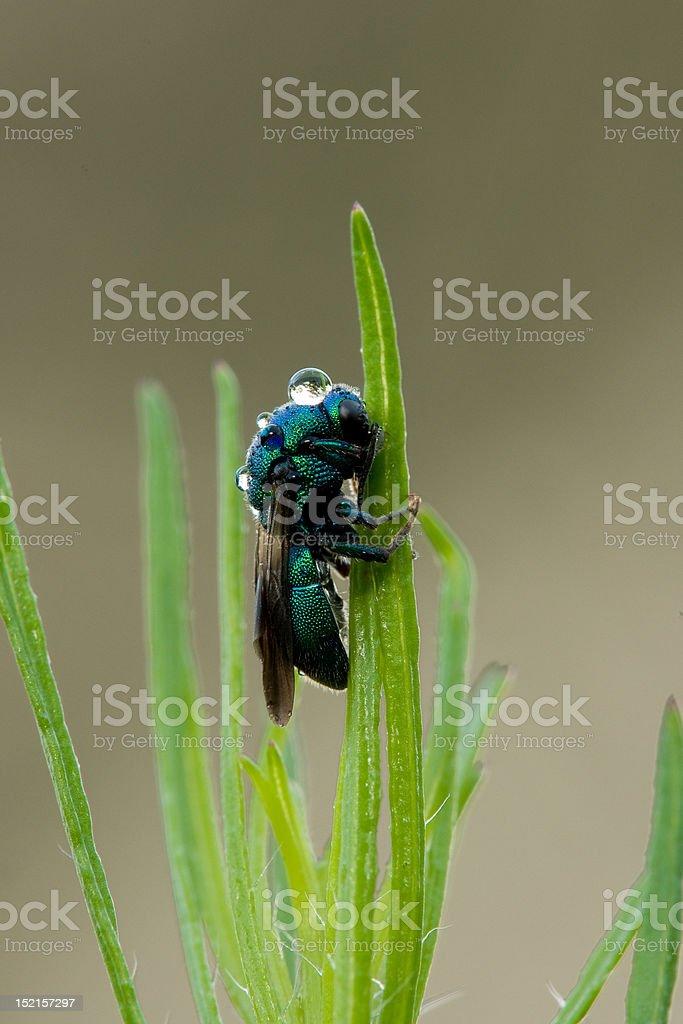 Green bee stock photo