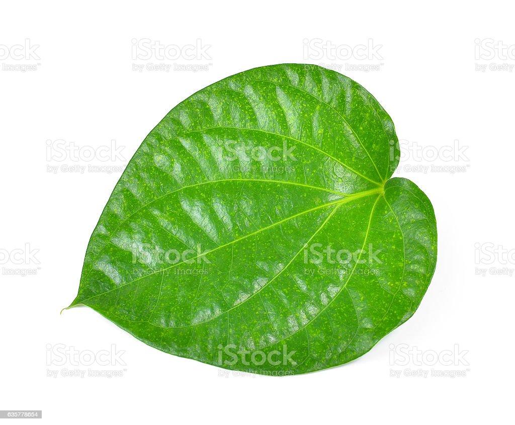 green betel leaf heart shape isolated on white background stock photo