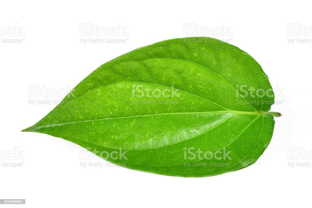 Green betel leaf heart shape isolated on white stock photo