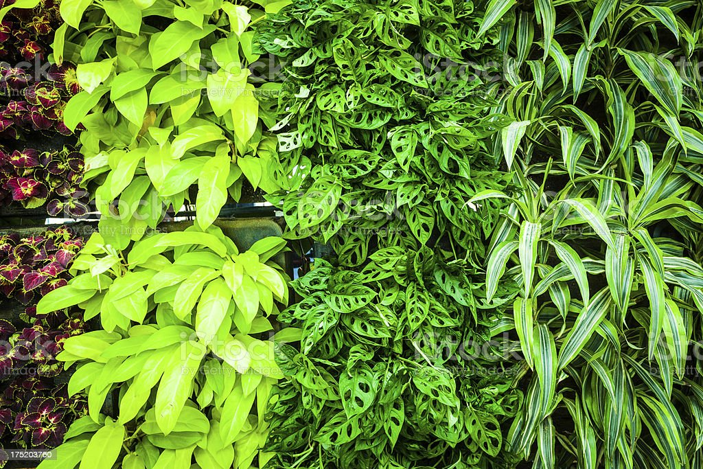 Green Biowall Background stock photo