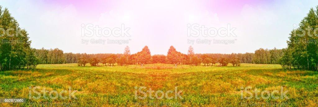 Green birch trees. stock photo