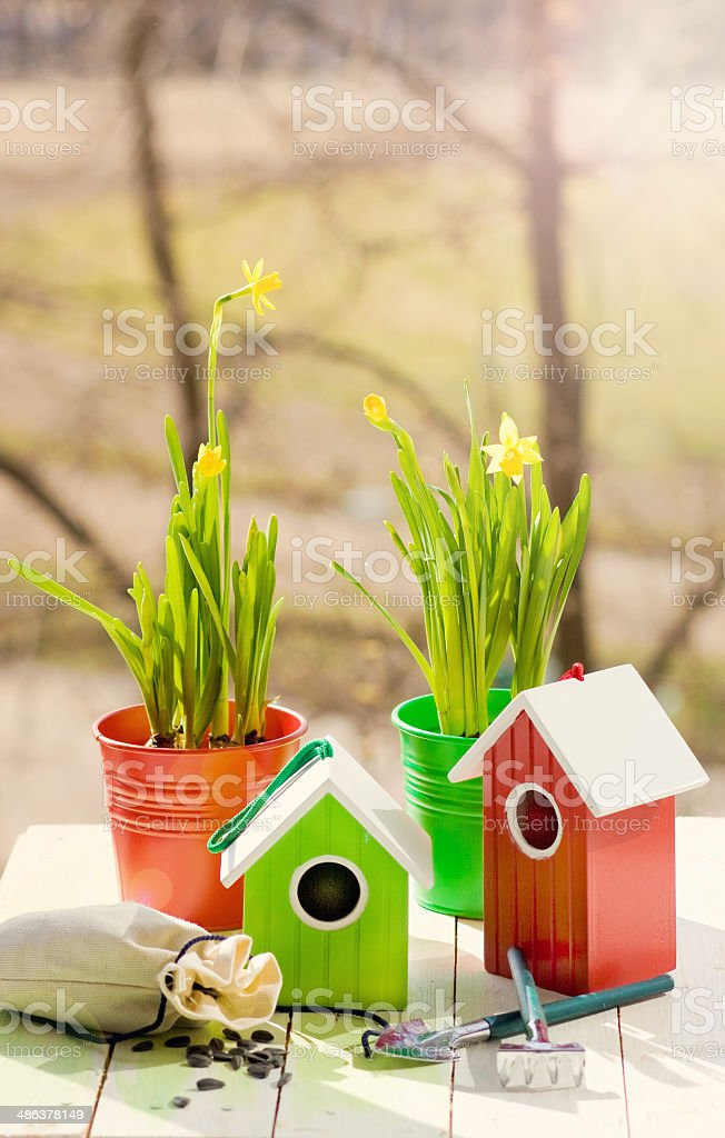 Green bird house and Narcissus in pots, shovel and seeds royalty-free stock photo