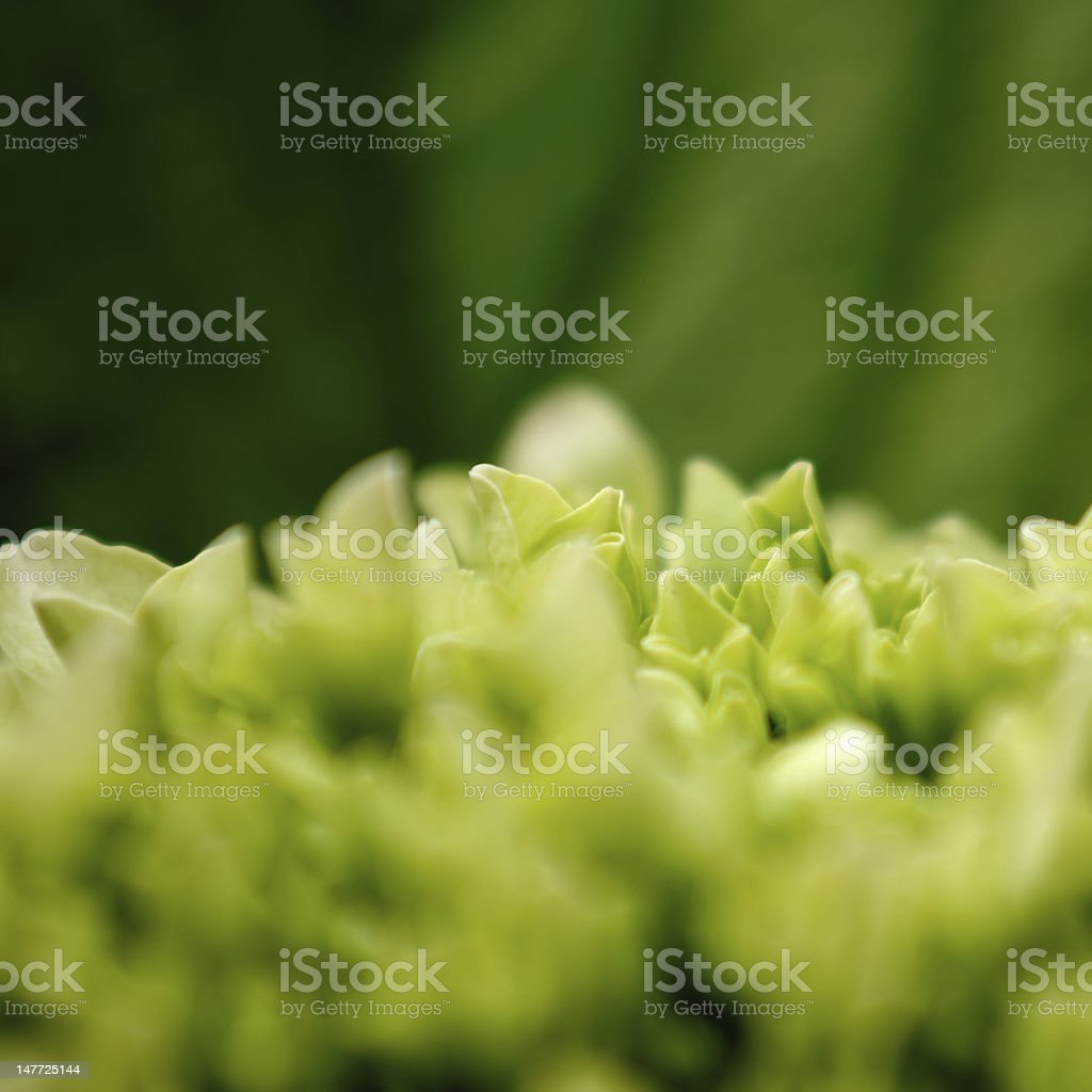 Green Blaze stock photo