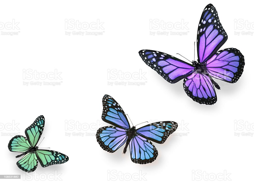 Green blue and purple butterflies stock photo