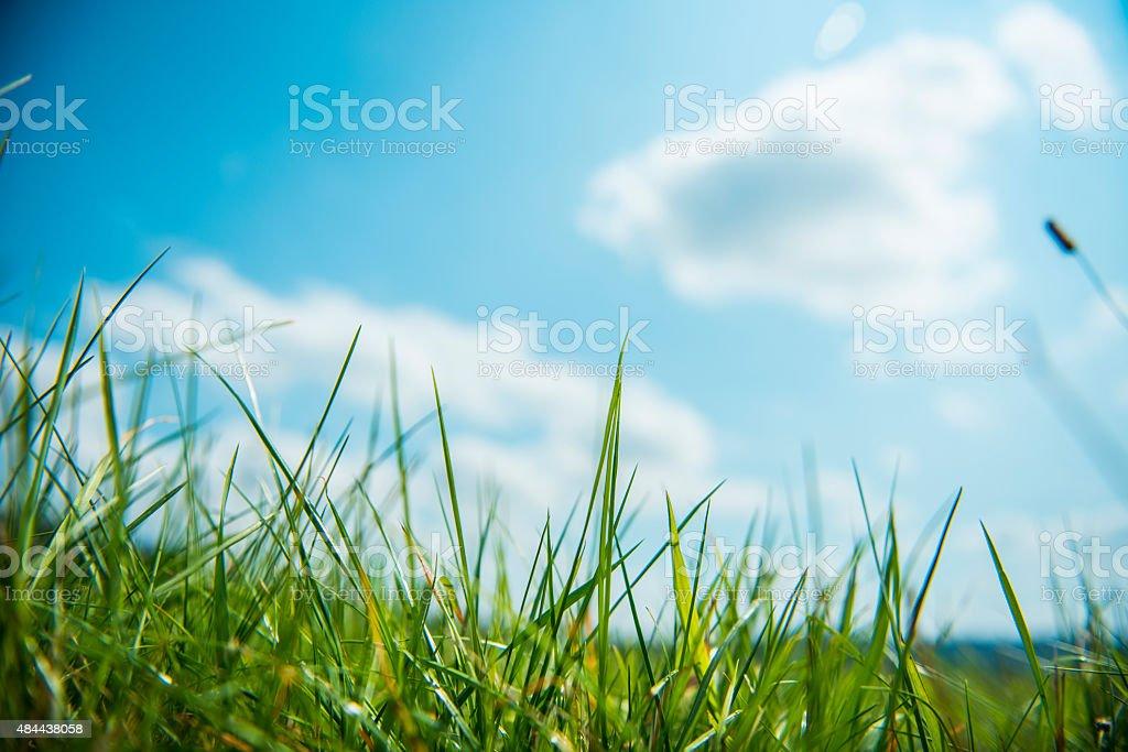 Green & Blue stock photo