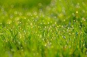 Green blur background