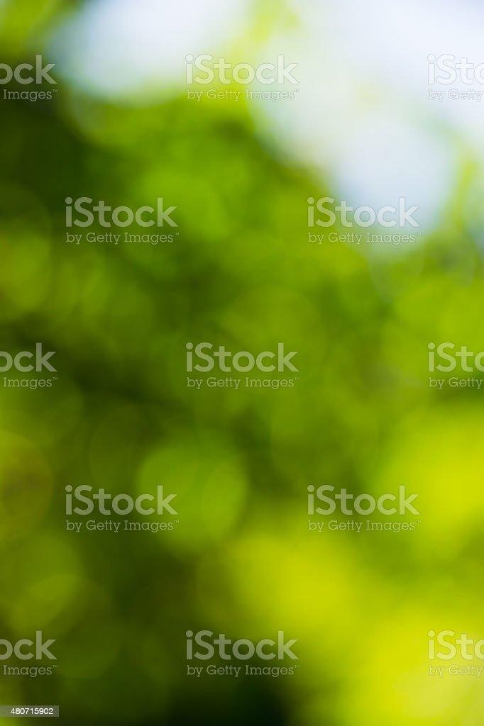 green bokeh foliage. natural background stock photo