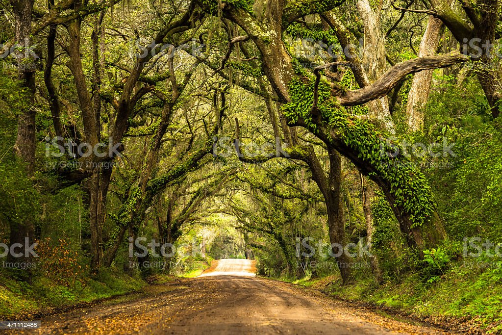 Green Botany Bay Road with moss covered trees stock photo