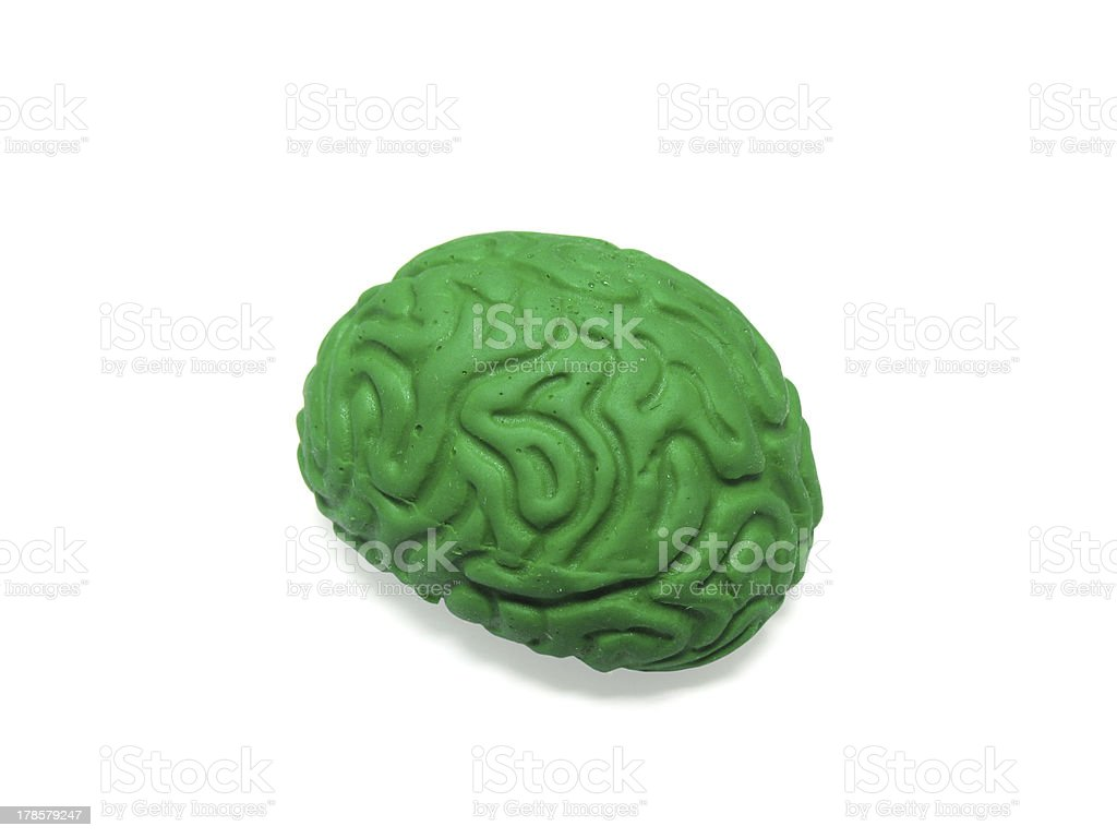 Green Brain Model on White Background stock photo