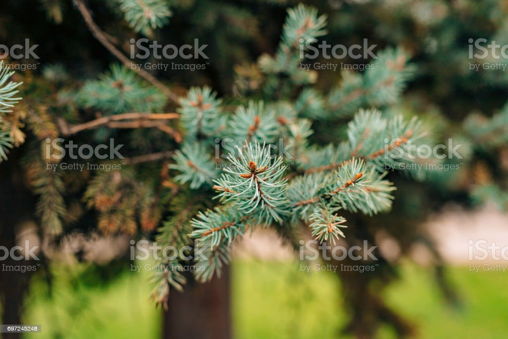Green branches ate on a tree stock photo