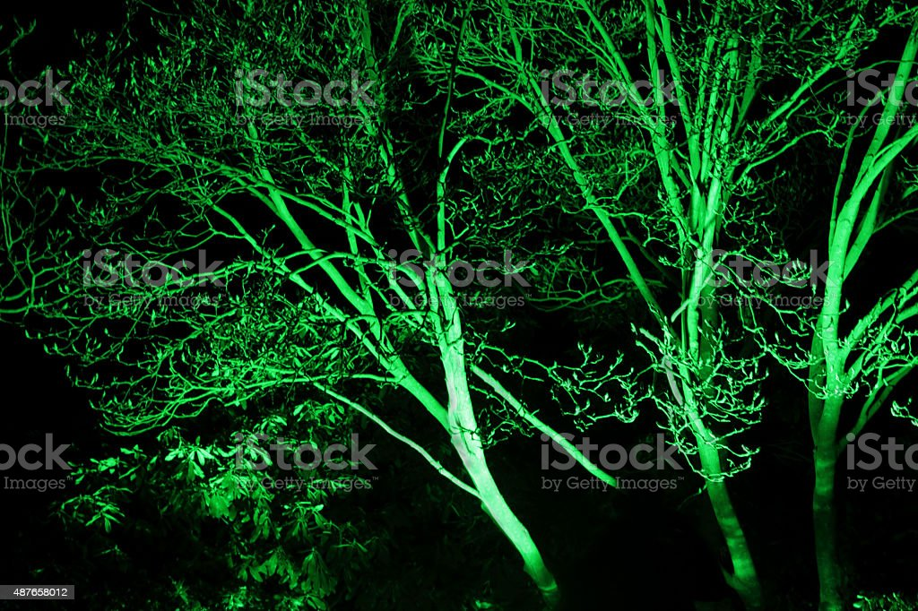 green branches stock photo
