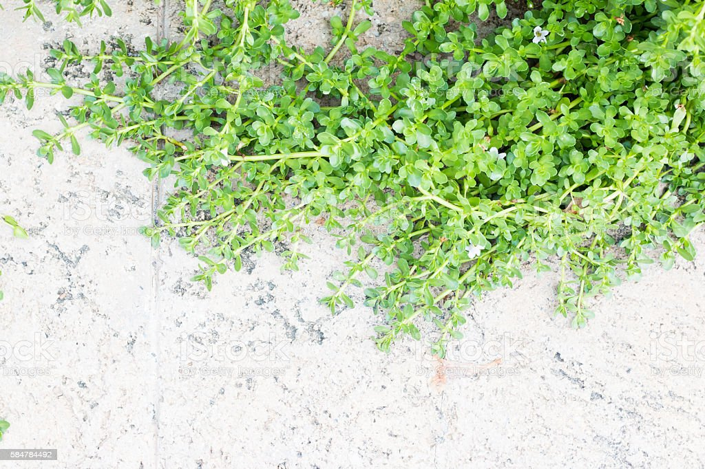 Green branchs background stock photo