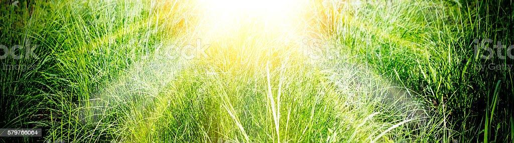 Green bright summer grass stock photo