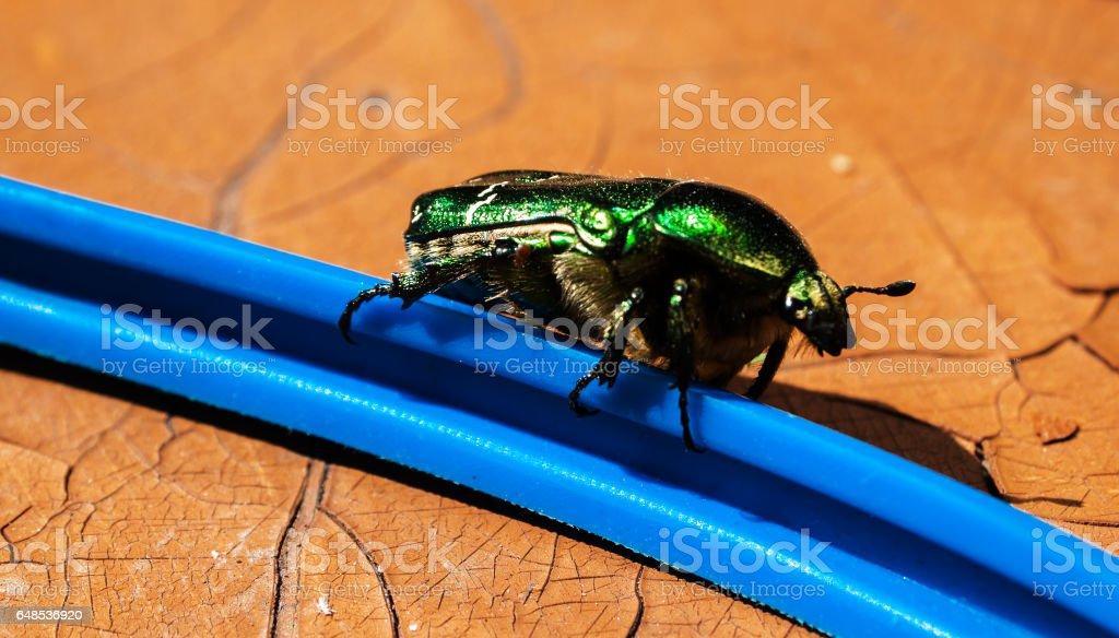Green bug closeup stock photo